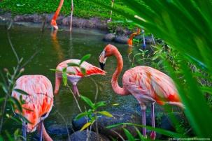 jardin botanique - flamands des caraibes