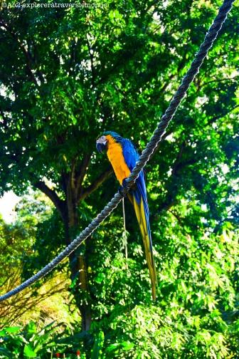 jardin botanique - robert le perroquet