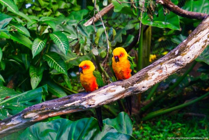 zoo de guadeloupe - oiseaux couleurs