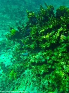 petite-terre - poissons