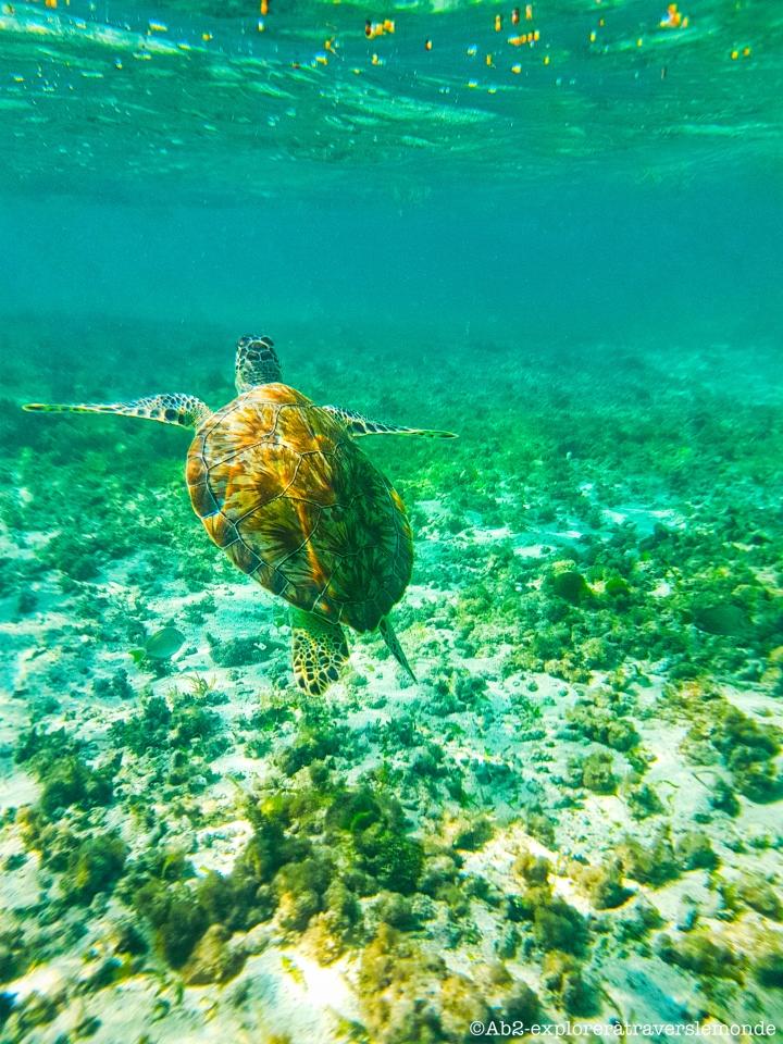 Un moment en compagnie des animaux marins sur les îles dePetite-Terre