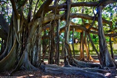 Jardin botanica - caou