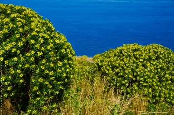 Arbres fleuries sur le Rocca