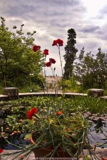 Jardin Botanique - étang
