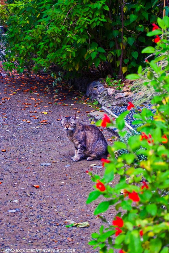 Jardin Botanique - mon pote le chat