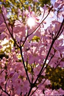 Jardin botanique - Power flower
