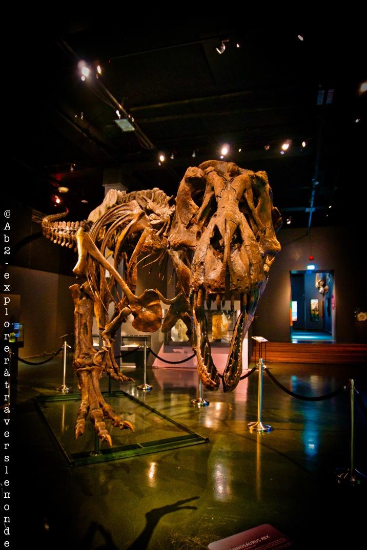 Musée d'histoire naturelle - dinos