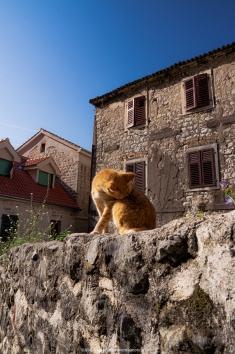 Kotor - Cat