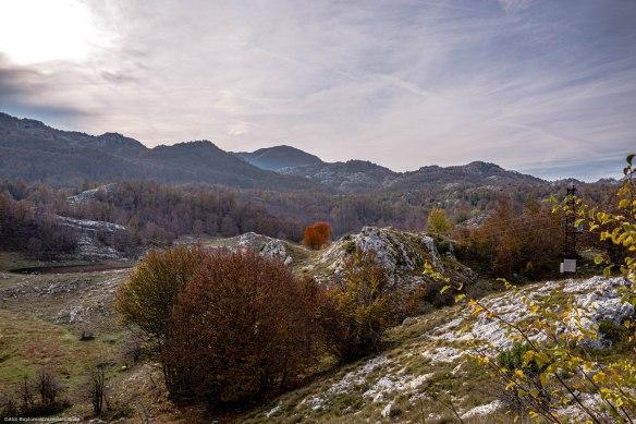 Mont Locven - Sur la route - Arbre 1